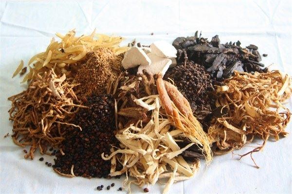 Hầu hết các bộ phận của cây đinh lăng đều có công dụng chữa bệnh